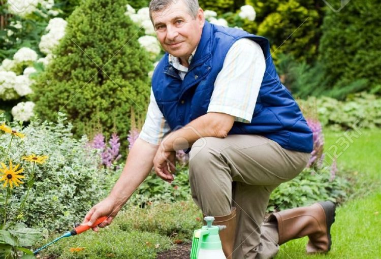 5612775-Man-raking-garden-Stock-Photo-gardening-man-gardener