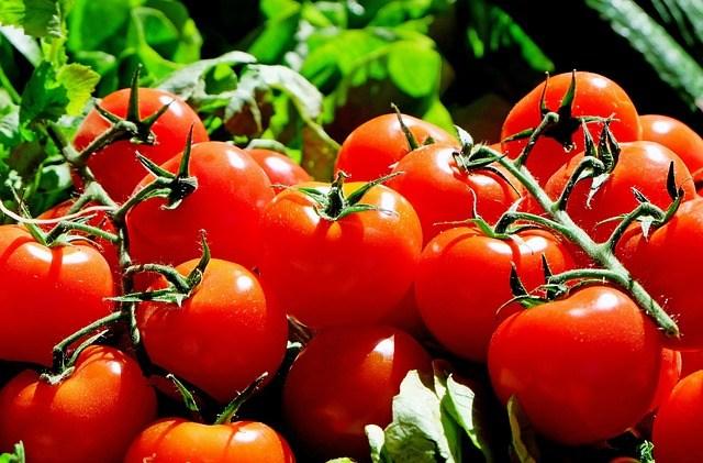 Care-sunt-cele-mai-bune-soiuri-de-rosii-ce-pot-fi-cultivate-in-Romania