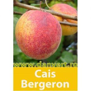 Cais Bergeron