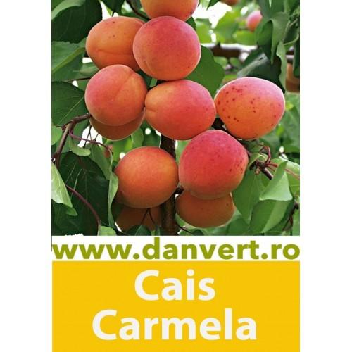 Cais Carmela