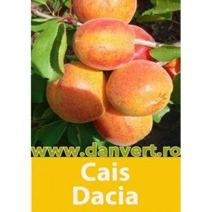 Cais Dacia