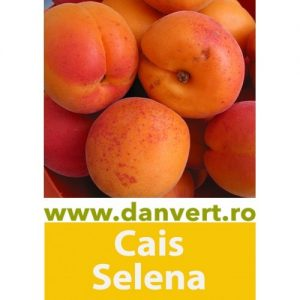 Cais Selena