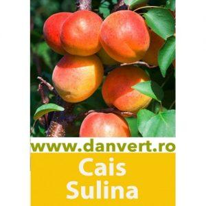 Cais Sulina