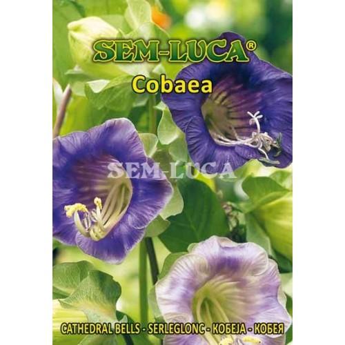 Cobaea