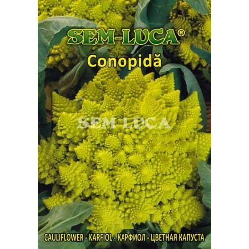 Conopida¦å romanesco