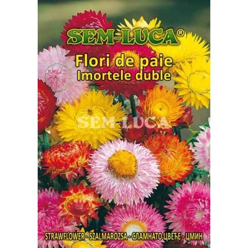 Flori de paie Imortele duble