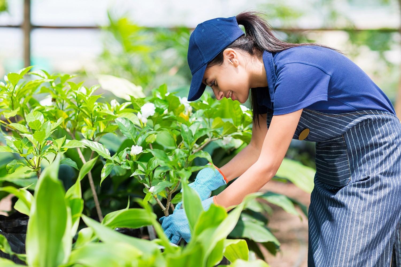 Gardener-is-pruning-shrubs-20170501