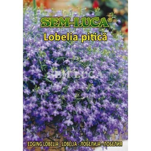 LOBELIA PITICA