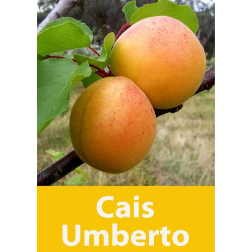 Poza Cais Umberto