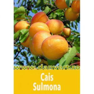 cais_sulmona