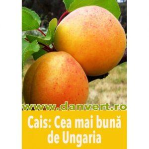 cea_mai_buna_de_ungaria