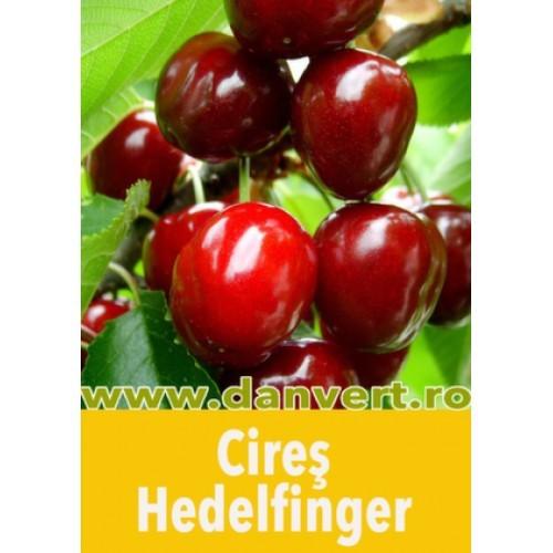 cires_hedelfinger