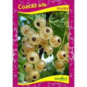 cocaz_alb_blanca