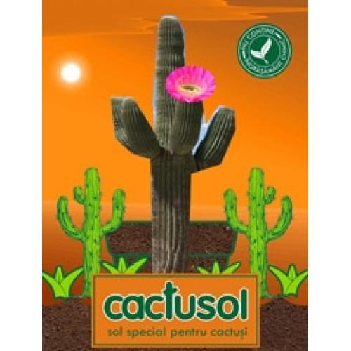 pamant cactusi