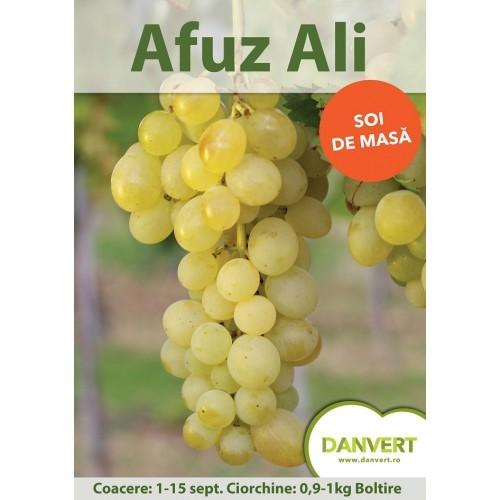 Afuz Ali