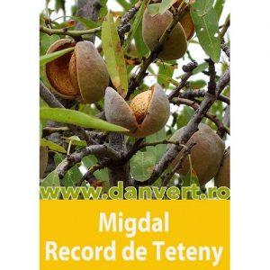 MIgdal Record de Teteny