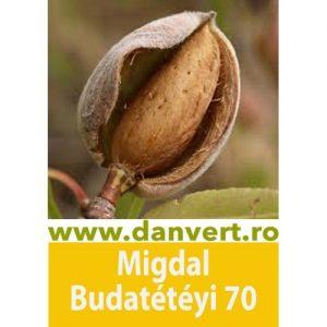 Migdal Budatetenyi