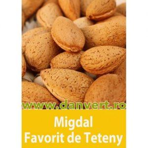 Migdal favorit de Teteny