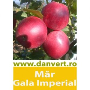 Mr Gala Imperial