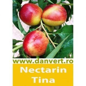 Necarin Tina