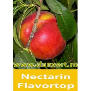 Nectarin Flavortop