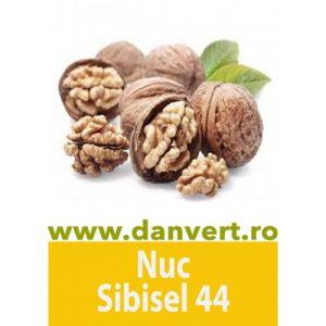 Nuc Sibisel