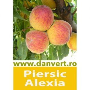 Piersic Alexia