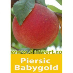 Piersic babygold