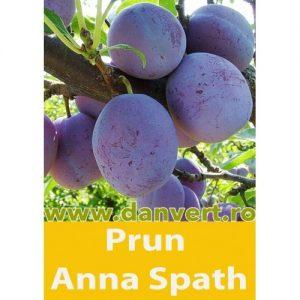 Prun Anna Spath