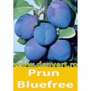 Prun Blufree