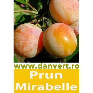 Prun Mirabelle