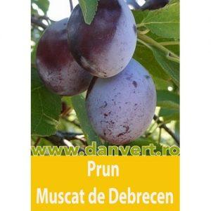 Prun Muscat de Debrecen