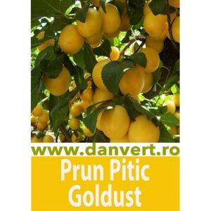 Prun Pitic Goldust