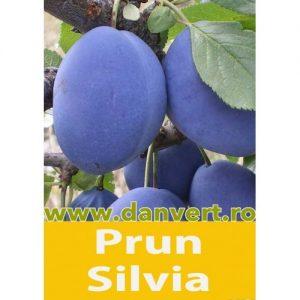 Prun Silvia