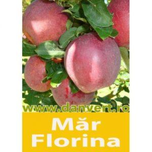 mar_florina
