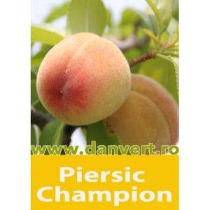 piersic_champion