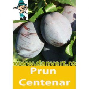 Prun_ Centenar