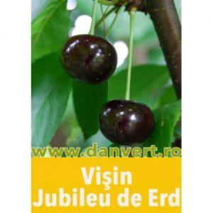 visin_jubileu_de_erd-