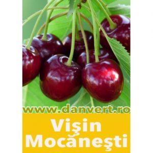 visin_mocanesti